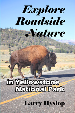 Explore Roadside Nature - Yellowstone NP Cover